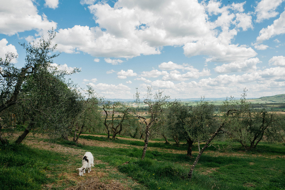 destination wedding photographer siena tuscany photo photography